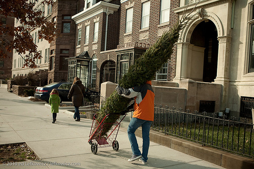 Bringing a Christmas tree home, Brooklyn