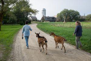 Farm life, Little Compton, Rhode Island.