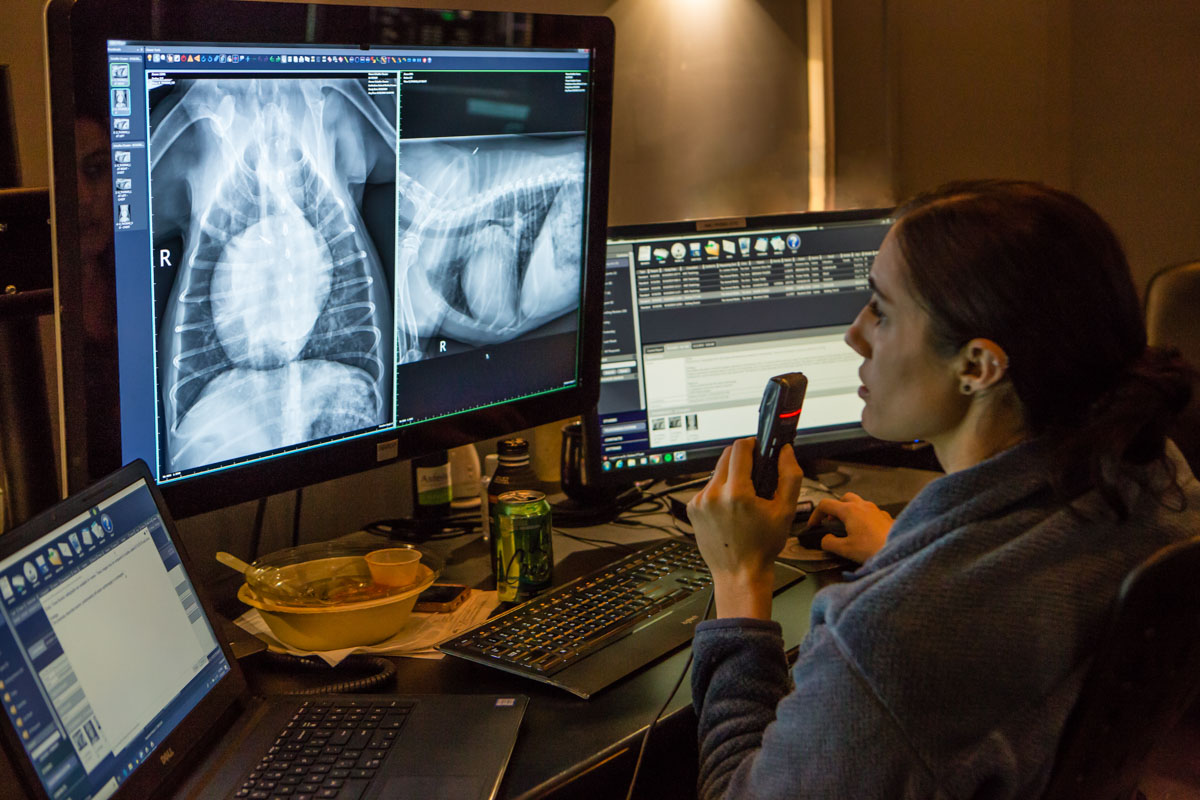 A technician evaluating an x-ray, for the Animal Medical Center.